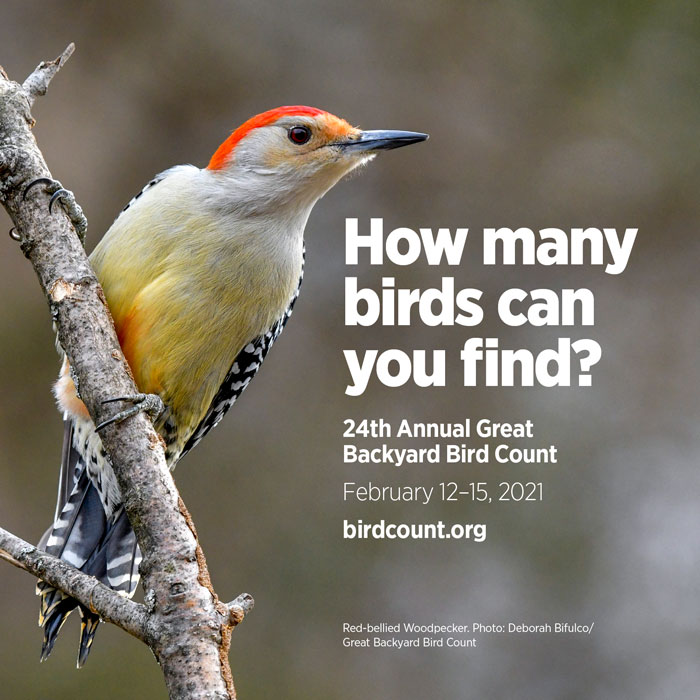 Poster for backyard bird count with a red-capped bird and text.