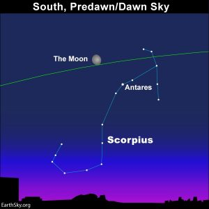 Moon above Scorpiius in the morning sky.