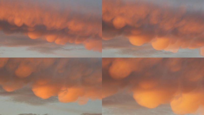 Four images of clouds with multiple rounded downward bulges in orange dawn light.