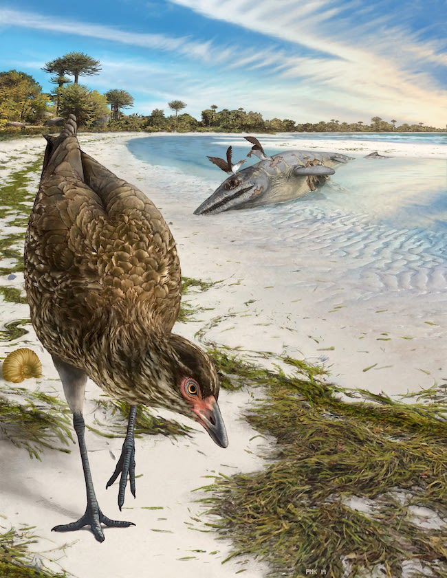 A chicken-like bird foraging on a beach, a dead mosasaur lying on the sand in the background.