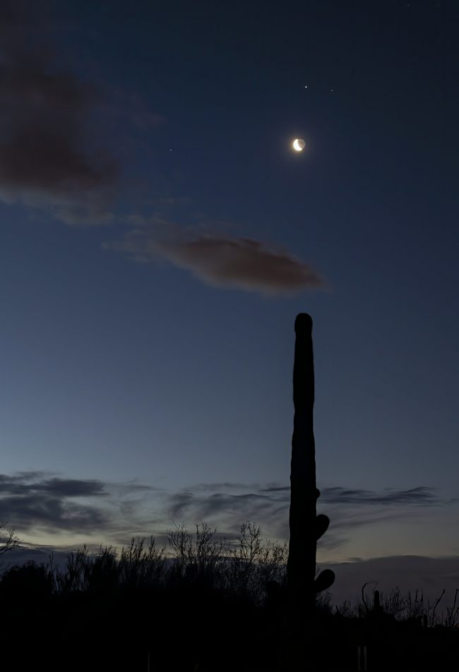 Planets and moon, over a Saguaro cactus.