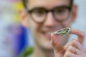Daniel Field appears blur in background while the tiny skull replica appears in focus.