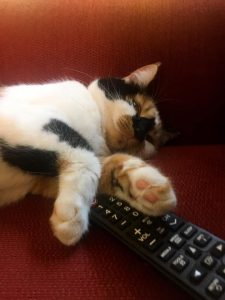 Cat sleeping on a remote.