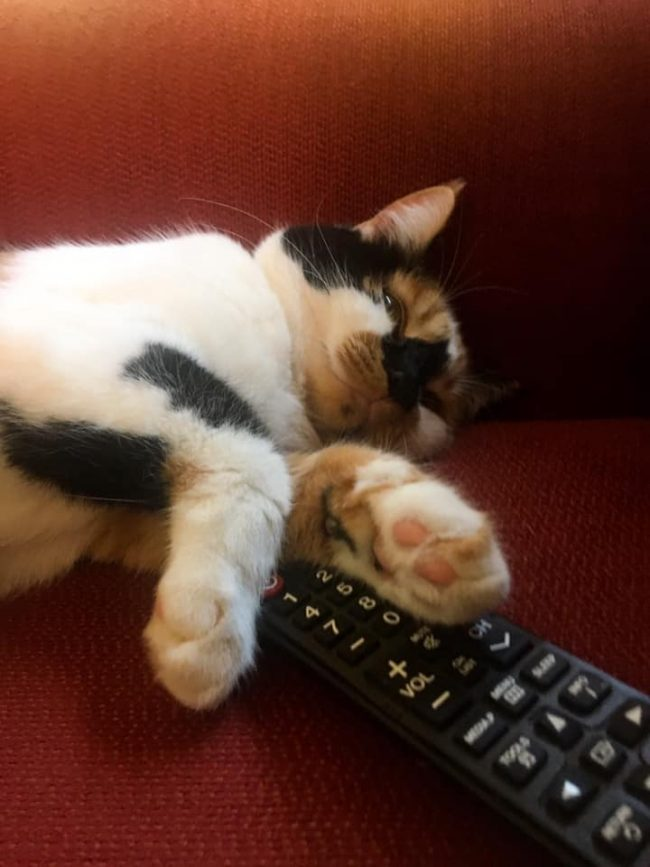 Black and white spotted cat sleeping on a TV remote control.