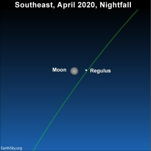 Moon and Regulus, the brightest star in the constellation Leo the lion, light up the night sky on April 4, 2020.