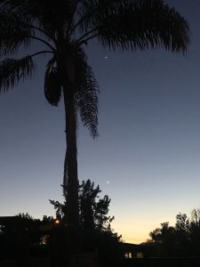 A tall palm tree with Venus just below its fronds and moon near horizon.