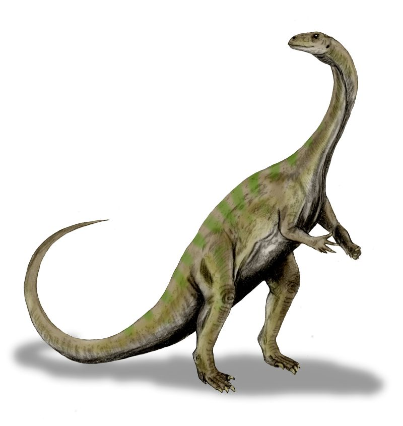 A dinosaur with long neck and tail standing on two feet.