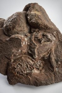 Fossilized clutch of eggs, one showing an embryo skeleton.