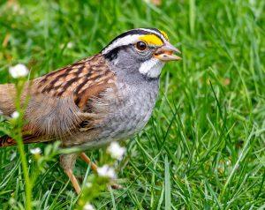 Bird on the grass.