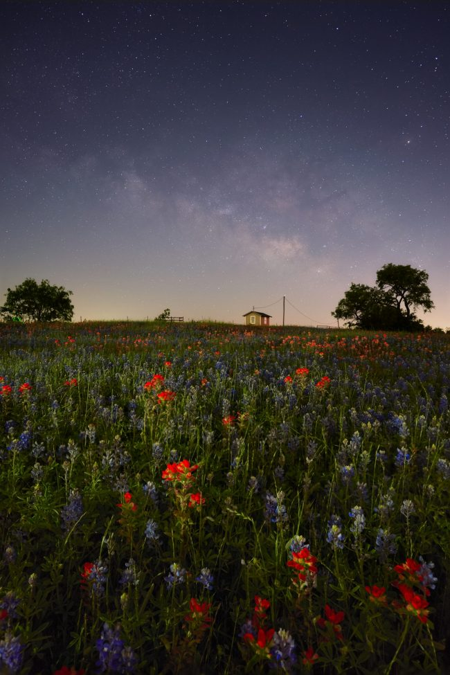 Milky Way over distant farm building past wide field of red paintbrush flowers and bluebonnet flowers.