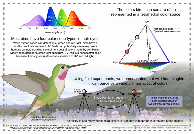 Infographic with a variety of spectrums and a diagram of the experimental feeder setup, with text annotations.