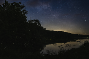 An image of the night sky featuring M6 and M7 near Shaula and Lesath. In the foreground, firefly light trails appear in the silhouette of trees and over water.