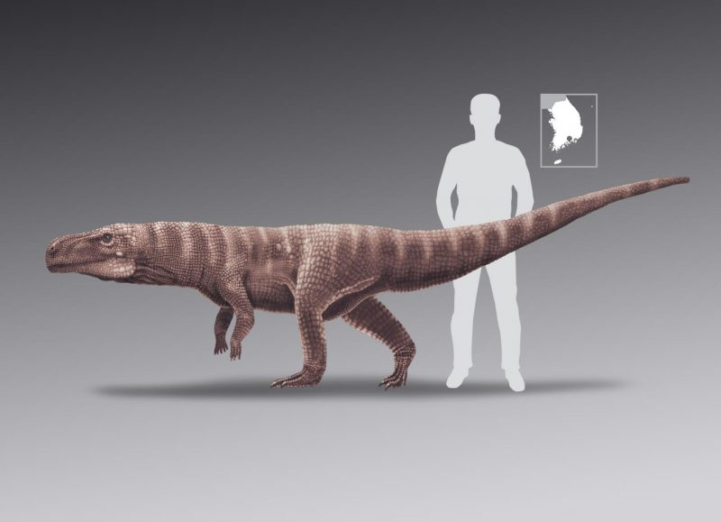 Long horizontal reptile with silhouette of person in background to same scale, and inset with map of Korea.