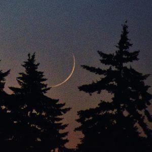 Thin waxing crescent moon, setting amongst trees.