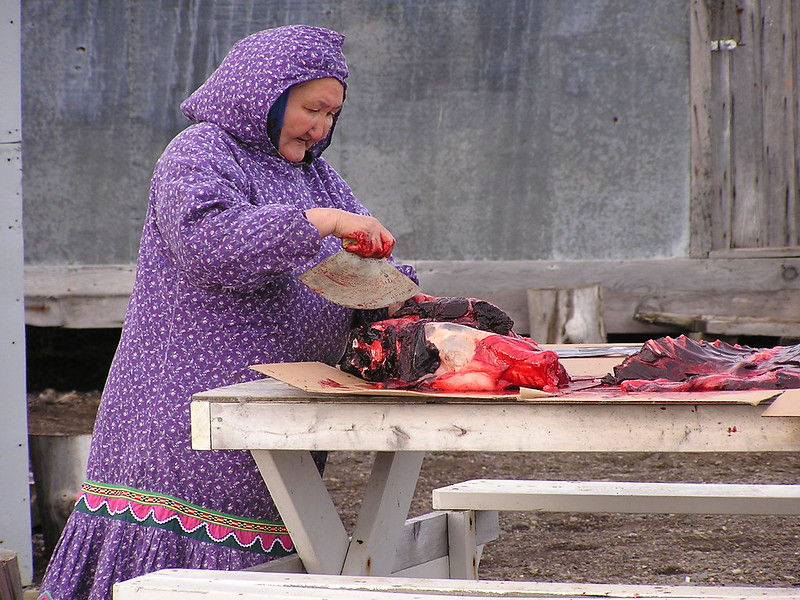 Old indigenous woman in hooded purple dress cutting up a big fish with a fan-shaped knife.