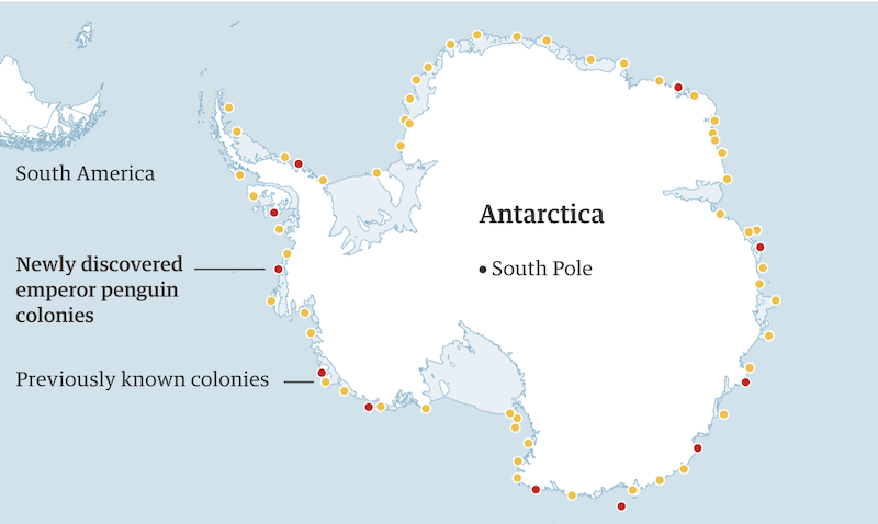 Map of Antarctica with many yellow and about 10 red dots around the margin, representing known and newly discovered colonies respectively.