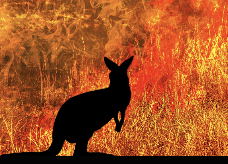 Large black silhouette of a kangaroo against a background of solid flame.