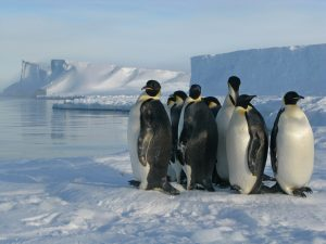 A group of penguins huddled together on the ice.