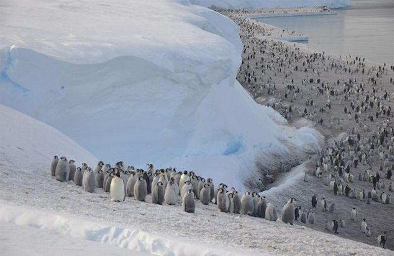 Many penguins on ice beach under ice cliff.