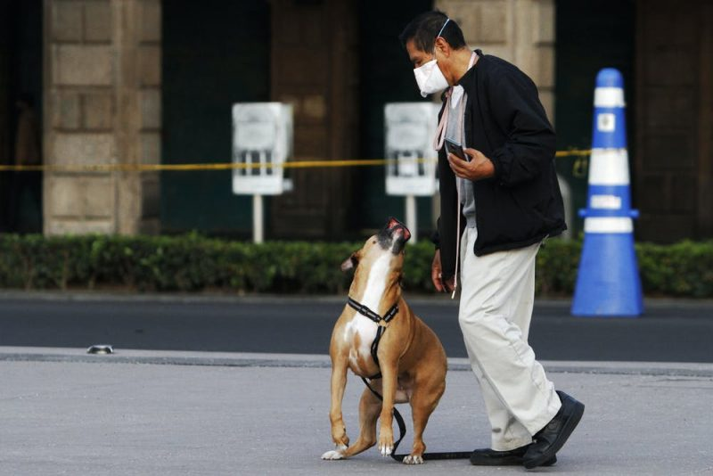 Man in a mask on a city sidewalk with a large, leashed brown dog looking up at him.