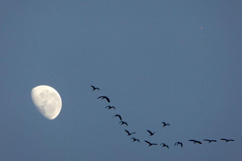 Gibbous moon, tiny red dot of Mars, ducks flying in a V.