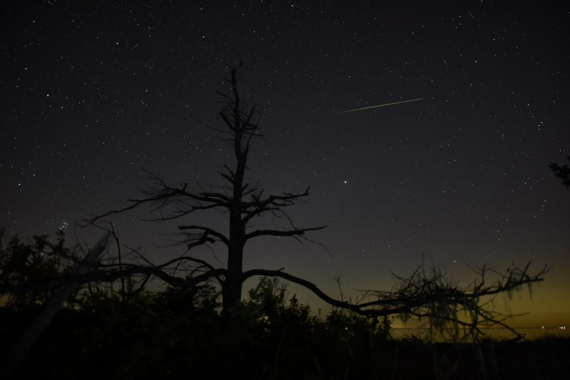 Starry sky above a single bare tree, thin white to greenish streak is part of the Perseid meteor shower.