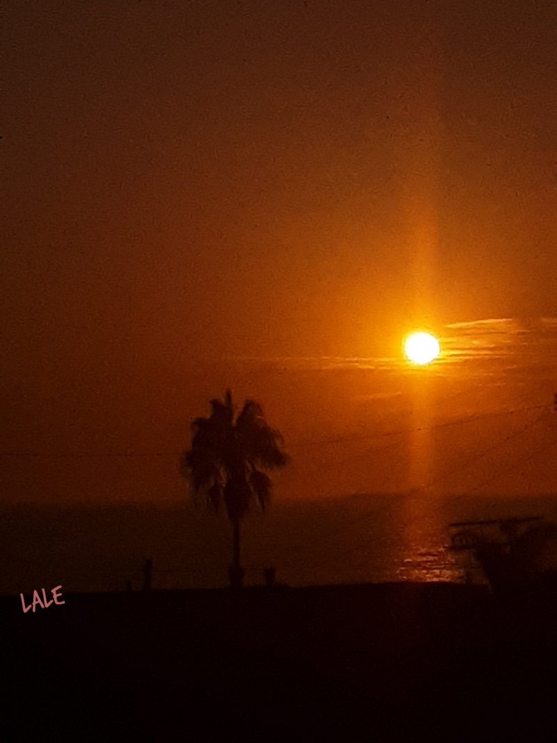 Smoky sunset over the ocean with palm tree silhouetted in foreground.
