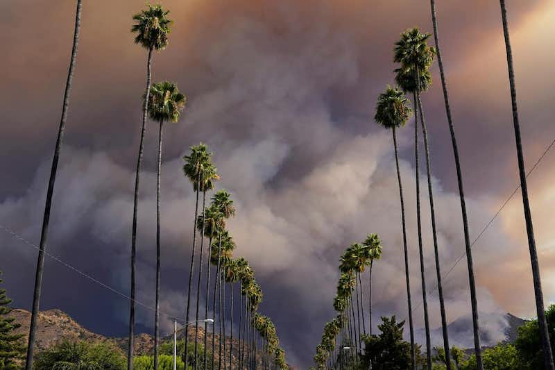 Looking down the middle of a long double row of tall palm trees, with apocalyptic black smoke filling the sky.
