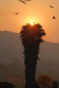 Sunrise, flying birds, palm tree.