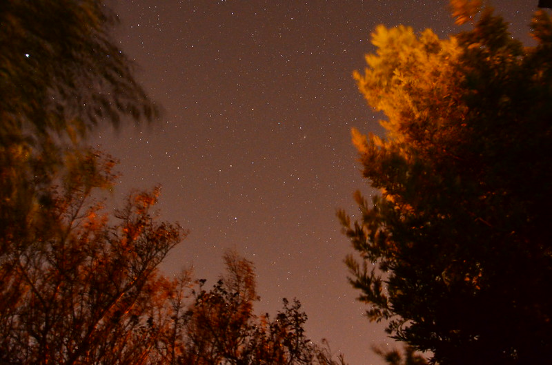Orange night sky with many stars, with trees in the foreground.