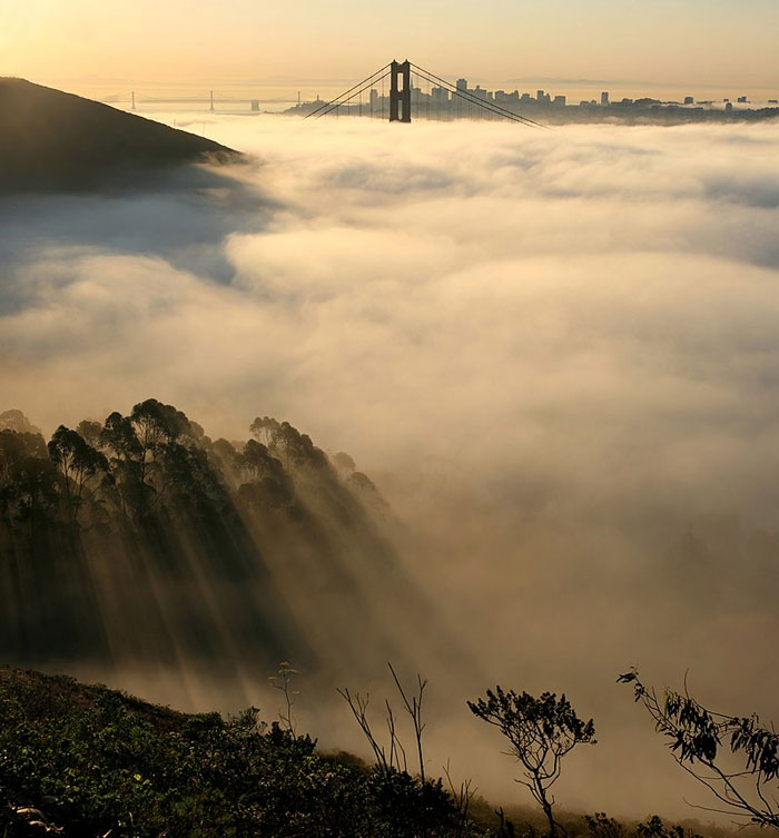 Sea of fog with top of bridge visible and sun rays through trees at bottom of image.