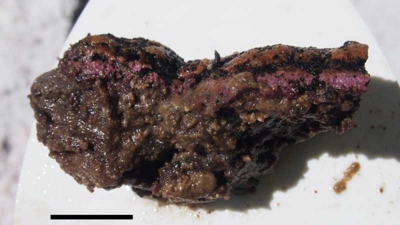 Glistening, rough-surfaced, potato-shaped purple and brown chunk.