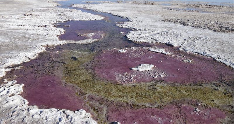 Irregular flat purple areas among what appears to be flat coastal rocks.