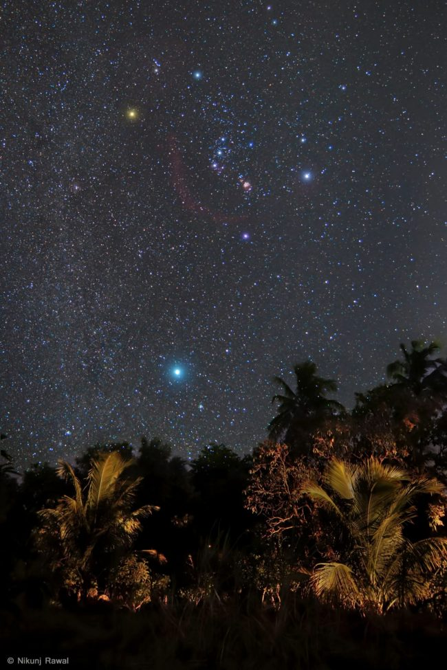 Star field over palm trees with Orion and bright many-hued stars.