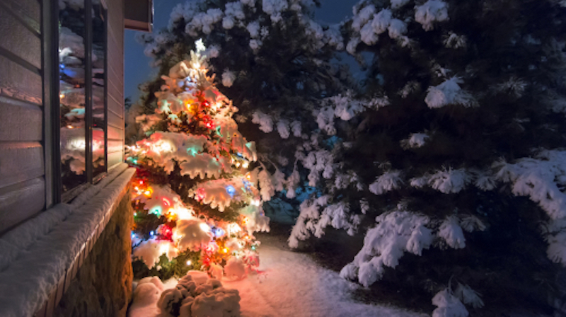 Outdoor Christmas tree with lights and snow on it, next to a house and more trees with snow.