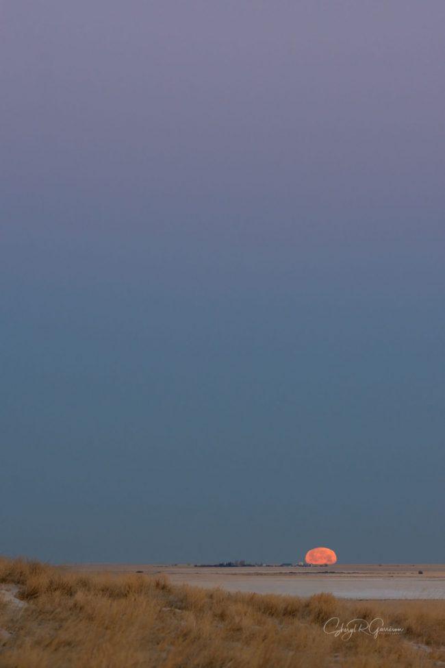 Reddish moon halfway over prairie horizon under a slate-colored clear dusk sky.