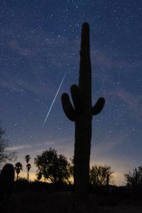 A large cactus is the foreground for this Geminid.