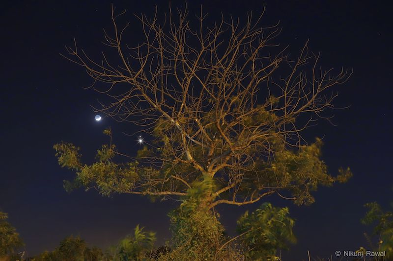 Lit up tree in front of dark sky with crescent moon with earthshine and two bright dots.