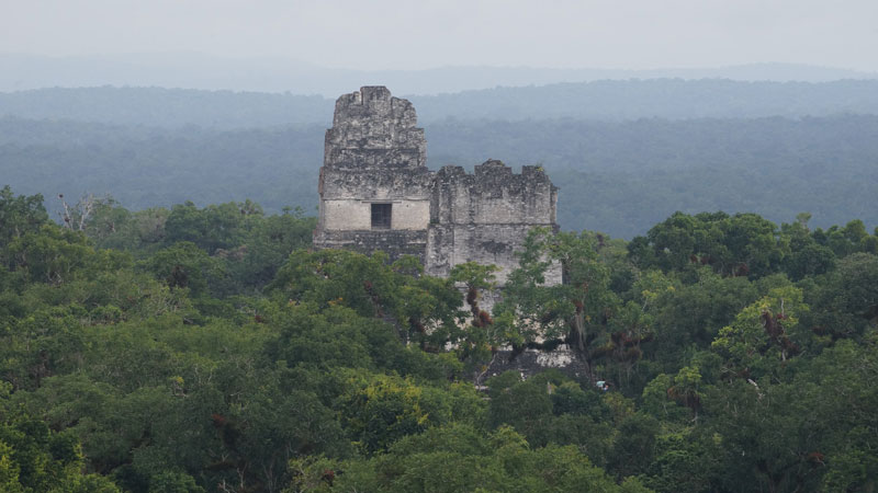 Tops of tall, ruined stone temples sticking up through dense forest.