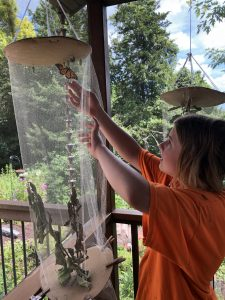 A child reaches into a monarch butterfly net.