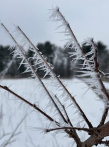 Rime ice makes spiky shapes on a branch.
