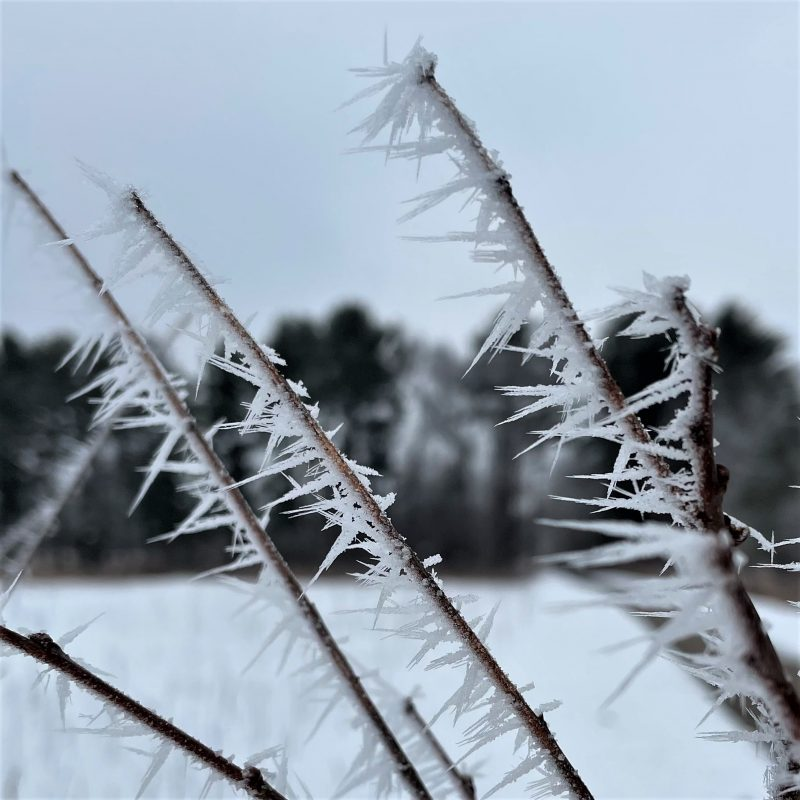 Rime ice makes lots of short, narrow spikes on twigs.