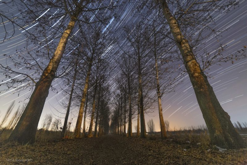 Perspective view of tree-lined path below hundreds of bright concentric lines in the sky.