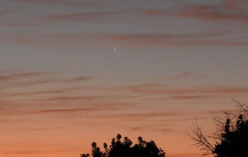 Venus as a small point of light in sunrise sky striped with faint pink clouds.