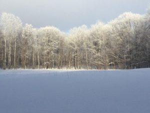 Freezing fog turns trees white.