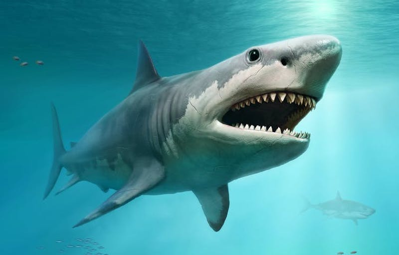 Enormous gray and white shark with wide open mouth and lots of teeth.