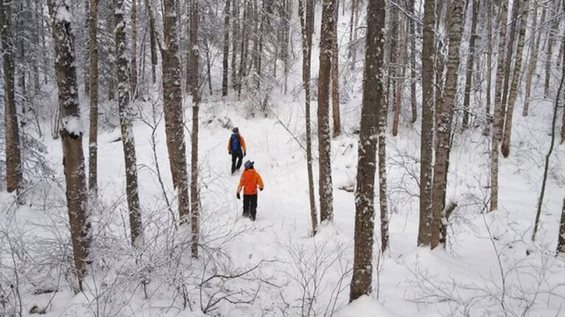Two searchers in orange walk through snow among bare trees.