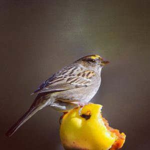 Small bird with yellow on top of its head on a partly-eaten yellow apple.