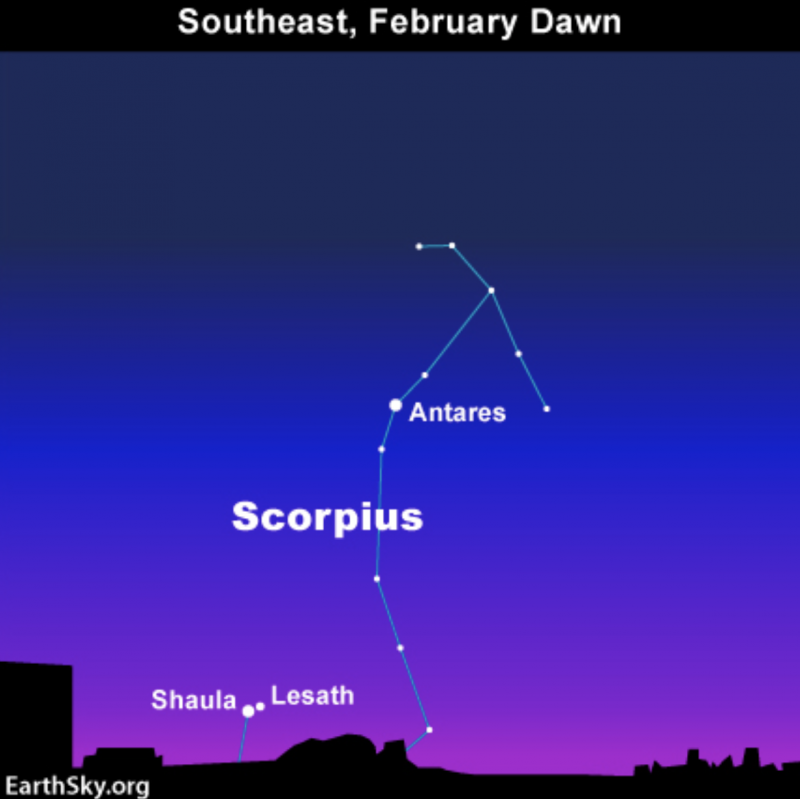 Star chart showing stars Shaula and Lesath in the Tail of constellation Scorpius.