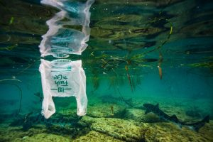 Sharks swim below and upside down white plastic bag floating in green water.